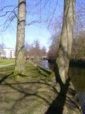 Bäume und See Stockbild