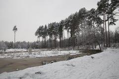 Bäume und See bedeckt im Schnee Lizenzfreie Stockbilder