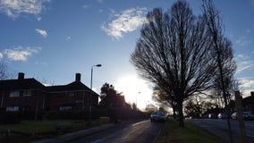 Bäume und Sonnenaufgang Lizenzfreie Stockbilder
