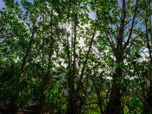 Bäume und Sonnenschein Lizenzfreie Stockfotos