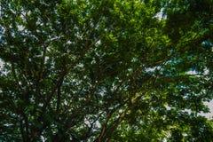 Bäume und Sonnenschein Stockfotos