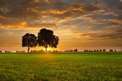 Bäume und Sonnenuntergang Stockfoto