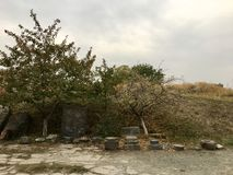 Bäume und Steine Stockfotografie