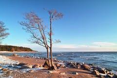Bäume und Steine am Seestrand Lizenzfreies Stockfoto