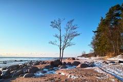 Bäume und Steine am Seestrand Stockfotografie