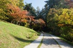 Bäume und Straße im Herbstpark Stockfotografie