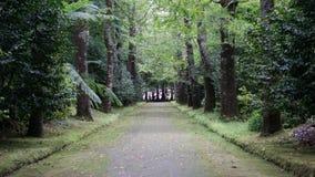 Bäume und Straße im Sao Miguel, Azoren stockfotos