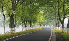 Bäume und Straßen lizenzfreie stockbilder