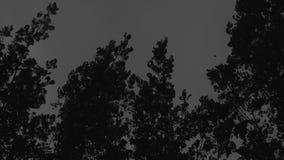 Bäume und Sturm stock video