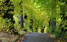 Bäume und Wald in Dänemark Lizenzfreie Stockfotografie