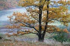 Bäume und Wald in Dänemark Stockfotos