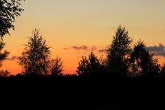 Bäume und Wald im Sonnenuntergang Stockfotografie