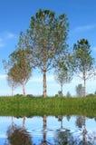 Bäume und Wasser Stockfoto