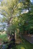Bäume und Wasser Lizenzfreies Stockfoto