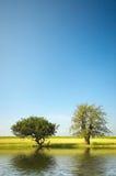 Bäume und Wasser am Sommer lizenzfreie stockfotos