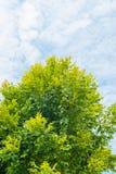 Bäume und weiße Wolke im blauen Himmel Lizenzfreie Stockbilder
