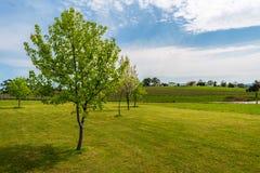 Bäume und Weinberg Stockfoto