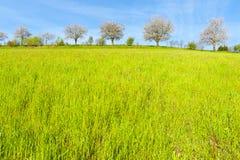 Bäume und Wiesen in der Schweiz Stockbilder