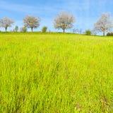 Bäume und Wiesen in der Schweiz Stockfoto