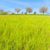Bäume und Wiesen in der Schweiz Lizenzfreie Stockfotografie