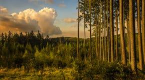 Bäume und Wolken Lizenzfreies Stockfoto