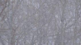 Bäume unter dem Schnee stock video footage