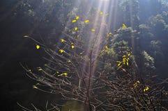 Bäume unter der Sonne Stockfotos