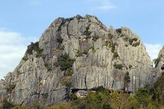 Bäume unter Felsen. stockbilder