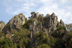 Bäume unter Felsen. lizenzfreie stockfotos
