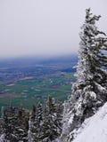 Bäume unter frischem Schnee auf Gebirgsspitze und Talansicht Stockbild