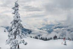 Bäume unter Schnee Stockfotografie
