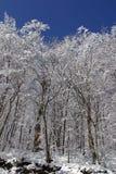 Bäume unter Schnee Lizenzfreie Stockfotos