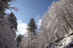 Bäume unter Schnee Stockbilder