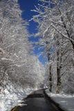Bäume unter Schnee Stockbild