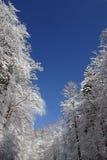 Bäume unter Schnee Lizenzfreies Stockfoto