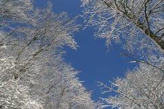 Bäume unter Schnee Lizenzfreies Stockbild