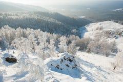 Bäume unter starken Schneefällen Stockfoto