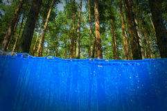Bäume unter Wasser lizenzfreies stockfoto