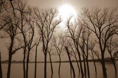 Bäume Unterwasser von der Flut Stockbild