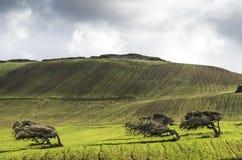 Bäume verbogen durch Mistral Stockfoto