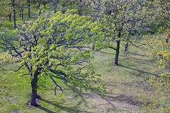 Bäume vom Kontrollturm an der Lapham Spitze Lizenzfreie Stockfotografie