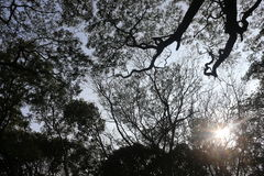 Bäume von einer Ansicht von unten mit Sonne strahlt das Eindringen aus Lizenzfreies Stockbild