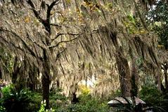 Bäume von Georgia Stockfoto