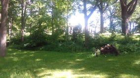Bäume von Hartford Stockfoto