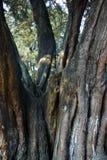 Bäume von Park 005 EL Ejido Stockfoto