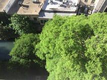 Bäume von San Antonio Stockbild