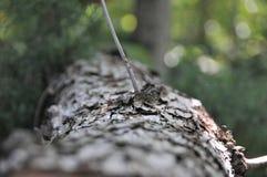 Bäume von Tennessee stockbilder