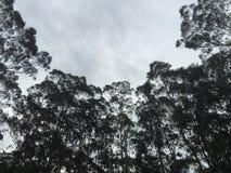 Bäume von unterhalb Lizenzfreies Stockbild