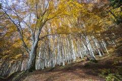 Bäume von unterhalb gesehen im Park von Foreste Casentinesi in Toskana, Italien Lizenzfreie Stockfotos