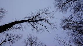 Bäume von unterhalb am Nachmittag stockfoto